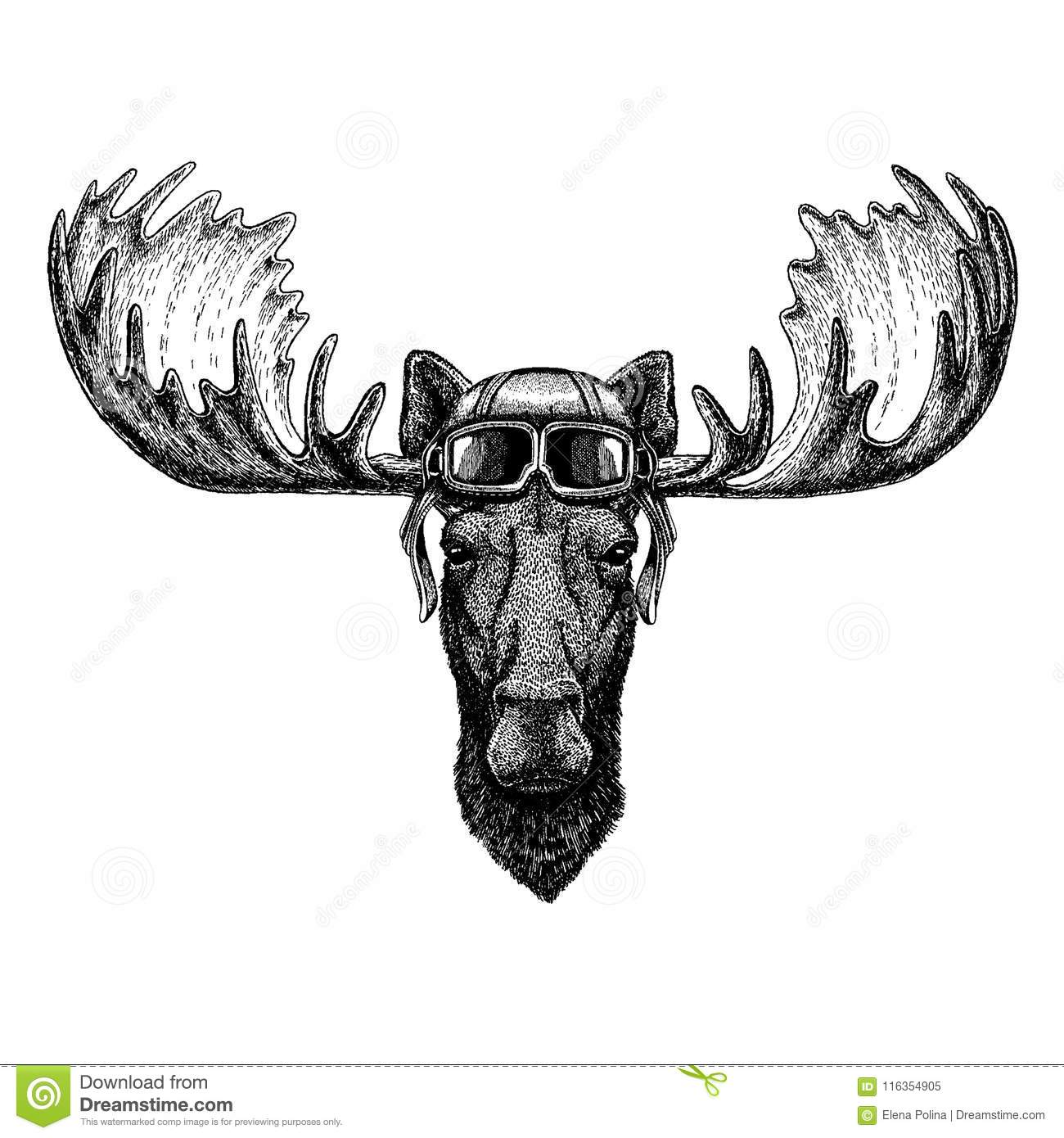 Animal Wearing Aviator Helmet With Glasses Vector Picture