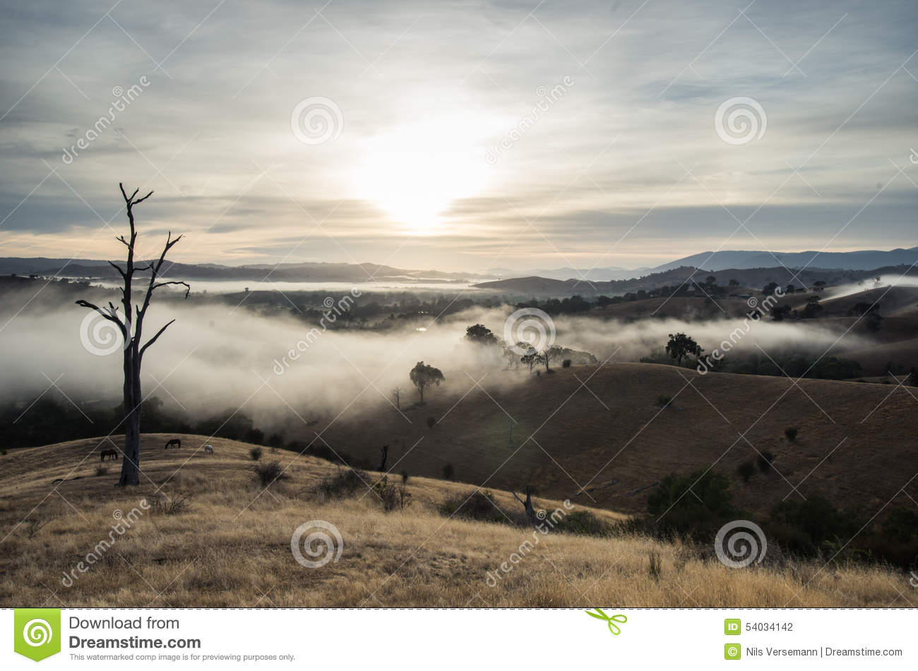 Morning Fog In Goulburn River Valley In Victoria
