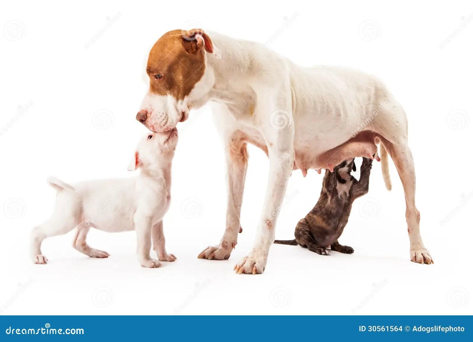Baby Gate Pet Door