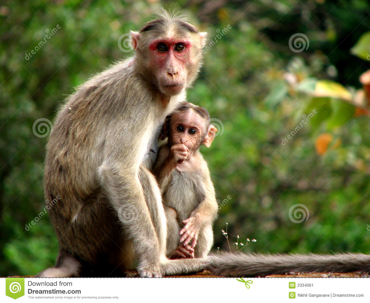 Mother N Baby Stock Image Image 2334061