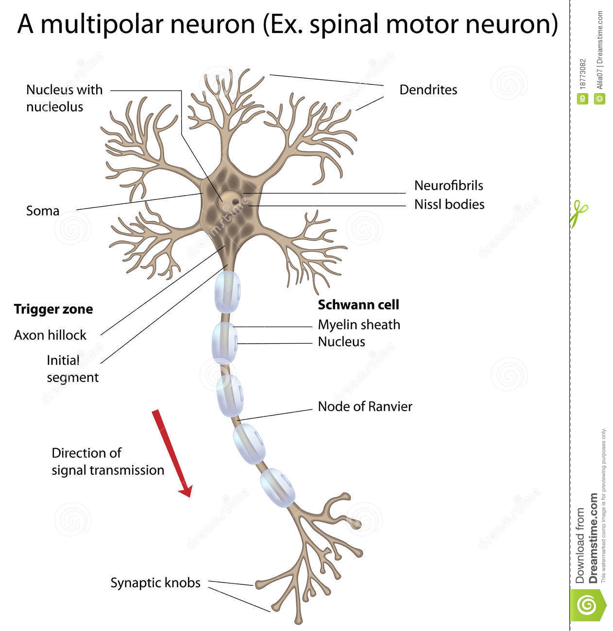 basic neuron diagram wiring mccb motorized schneider motor detailed and accurate labeled vers stock