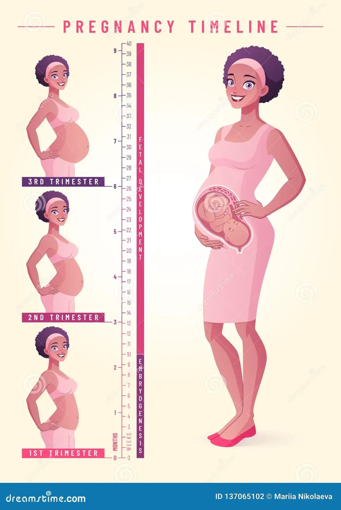 781ebf03f Mujer Embarazada Con El Feto Ejemplo Del Vector De La Cronología
