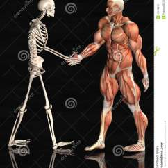 Skeletal And Muscular System Diagram 7 Pin Trailer Connector Wiring Diagrams Skin Anatomy Free Engine Image For User