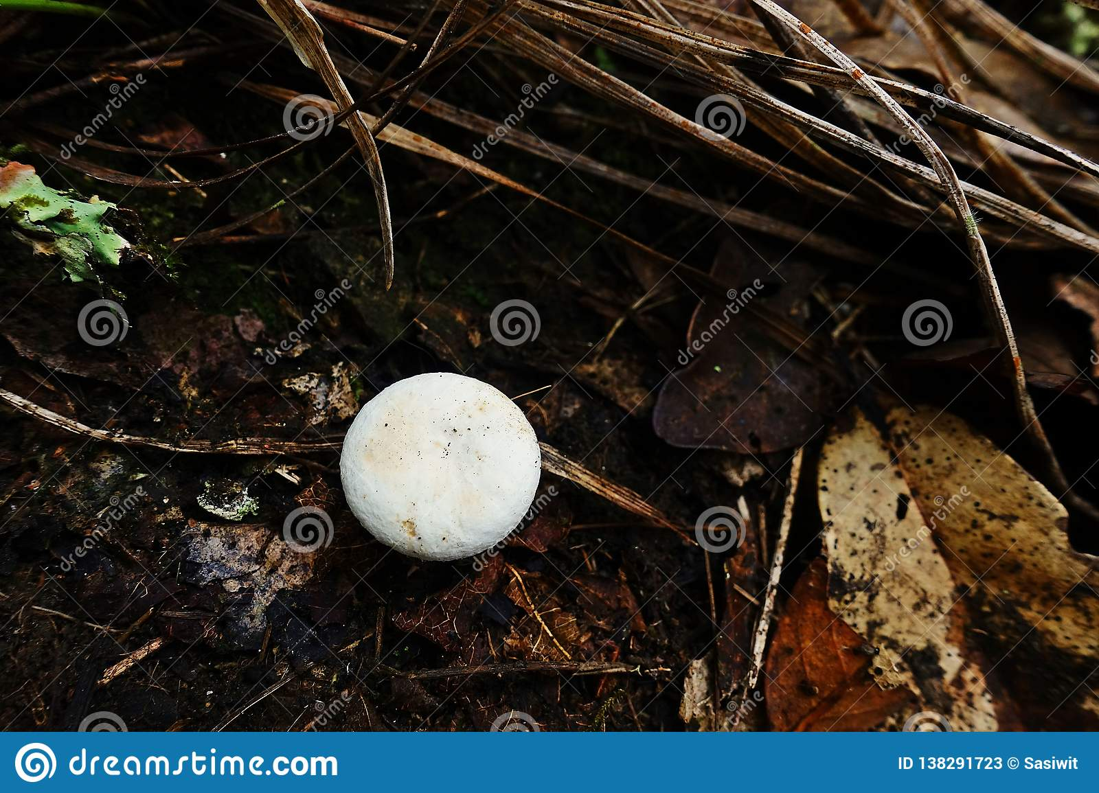 Mushroom In Natural Tropical Rain Forest Stock Image