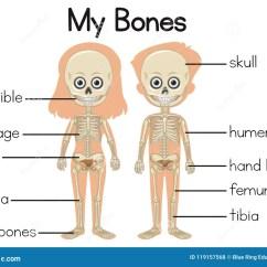 Rib Cage Bone Diagram 240v Sub Panel Wiring My Bones With Two Children Stock Vector Illustration Of
