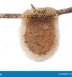 natural beehive diagram photo 4 [ 1300 x 957 Pixel ]