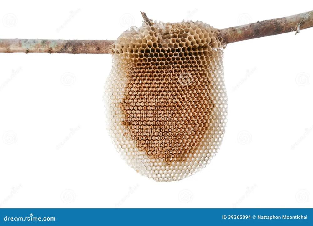 medium resolution of natural beehive diagram photo 4
