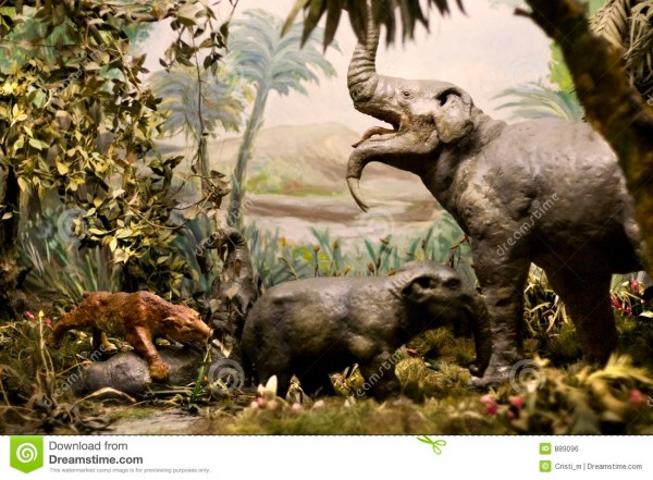 Natural History Museum Exhibition Royalty Free Stock