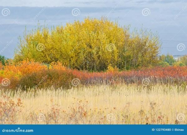 natural landscapes. autumn landscape