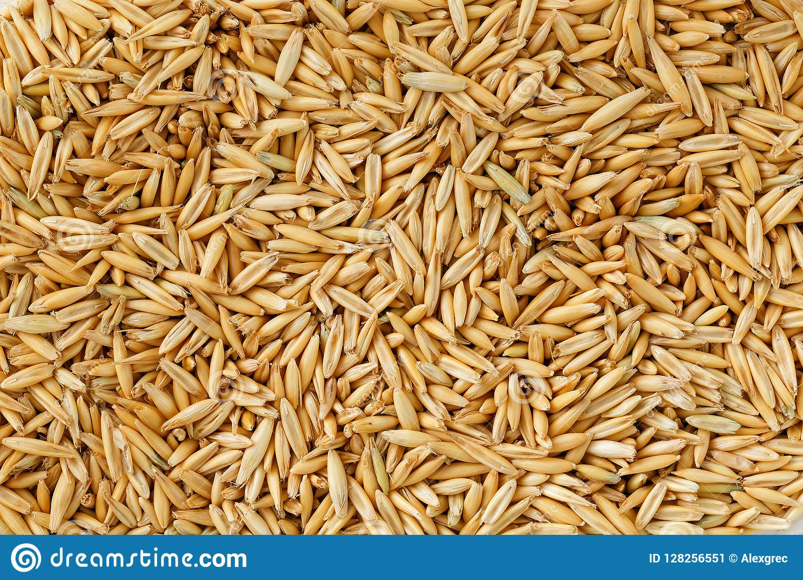 hight resolution of natural oat grains background close up gold grain