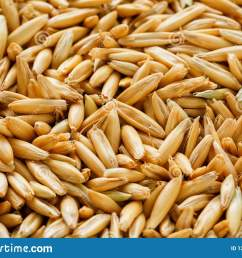natural oat grains background close up gold grain  [ 1600 x 1156 Pixel ]
