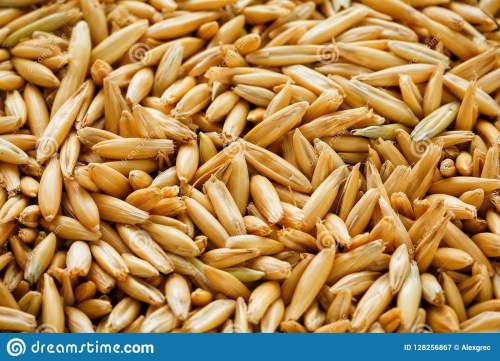 small resolution of natural oat grains background close up gold grain