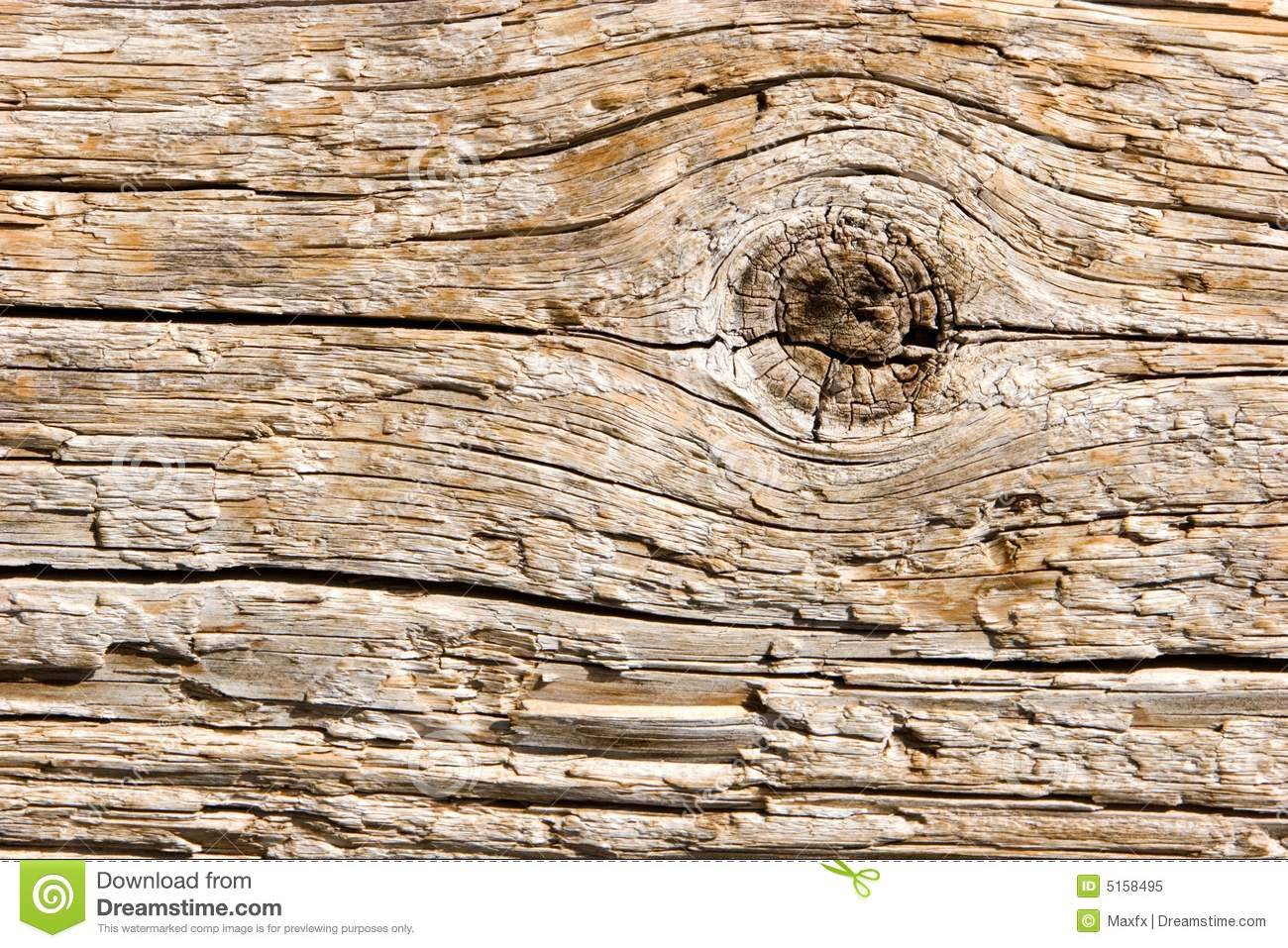 Birch Tree Fall Wallpaper Close Up Natural Wood Texture Closeup Stock Image Image Of Sawed