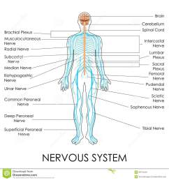 vector illustration of diagram of nervous system [ 1300 x 1390 Pixel ]