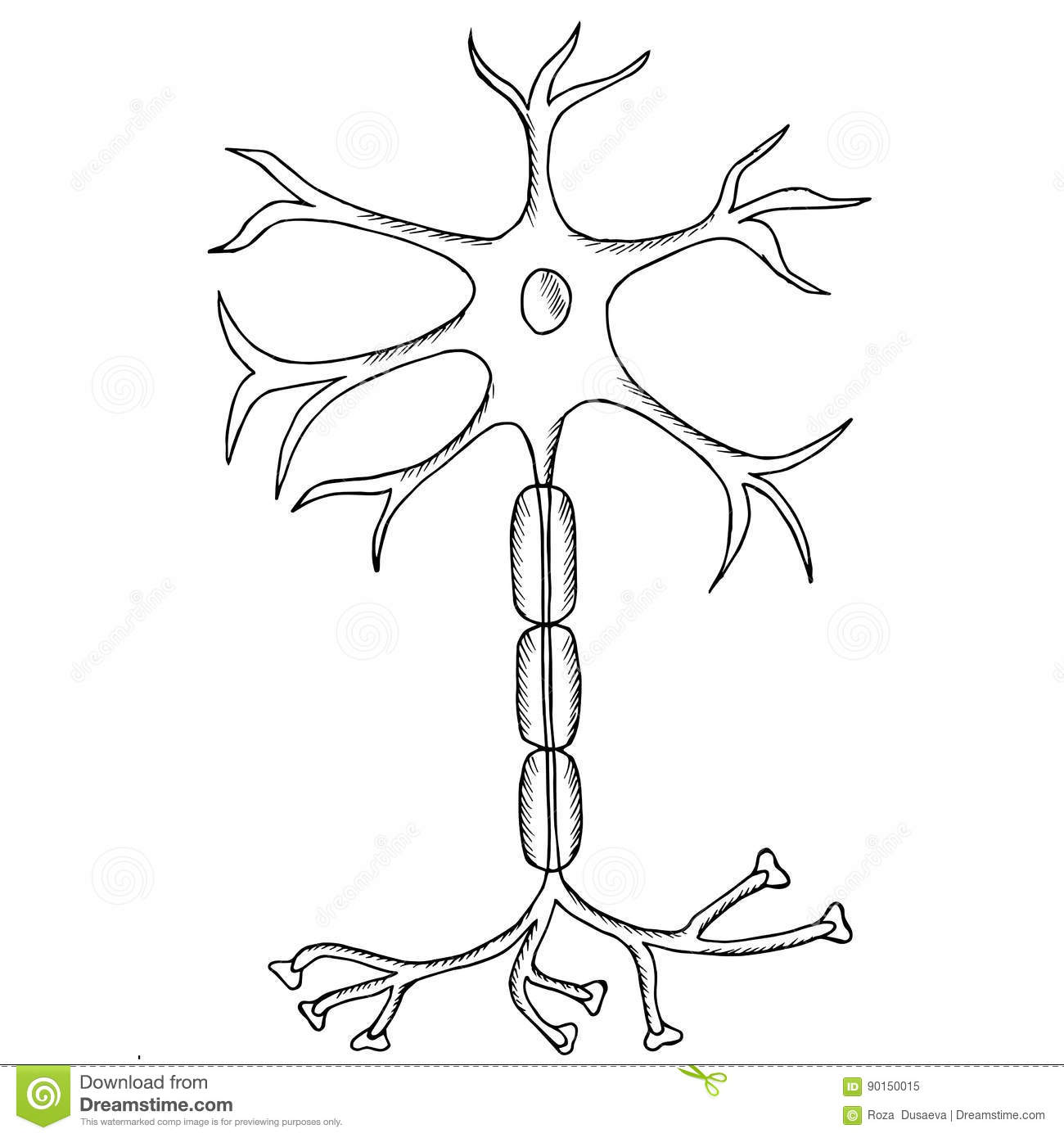 Neuron Sketch Stock Vector Illustration Of Neurology