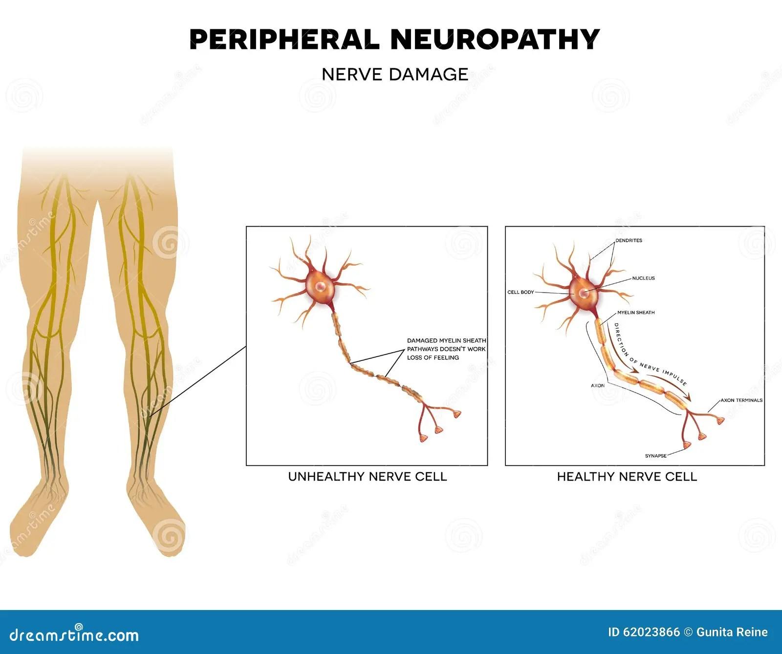 lower leg nerve diagram avital 3100l wiring of extremity nerves get free image