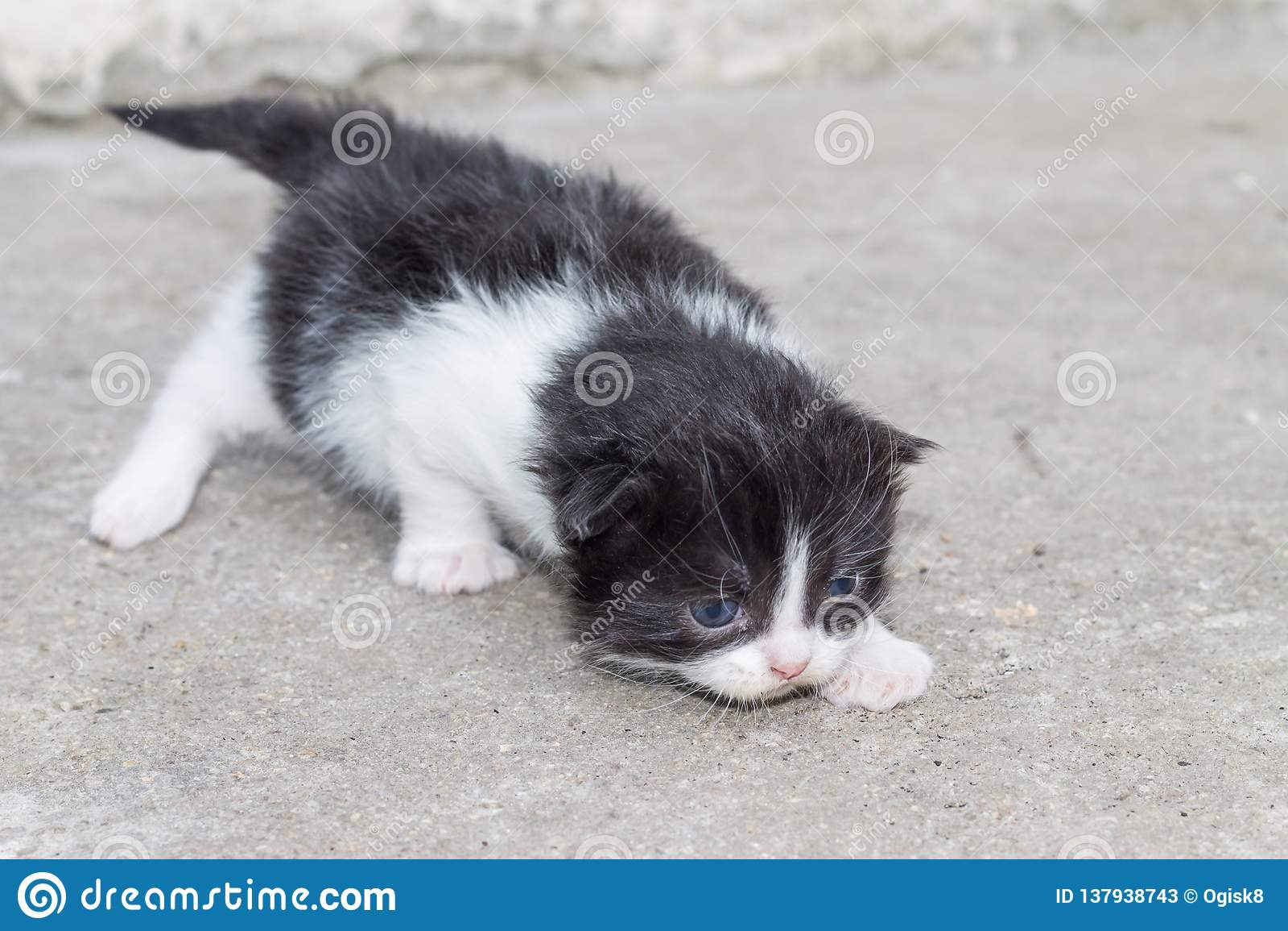newborn baby kitten stock