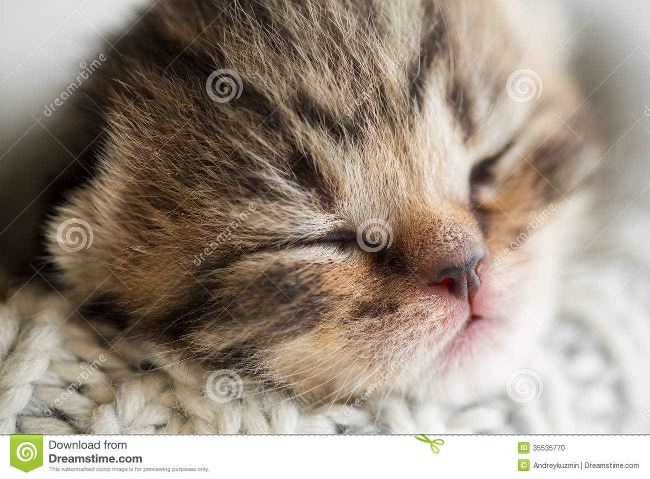 Cute Boy Child Wallpapers Newborn Sleeping Baby Kitten Stock Photo Image Of
