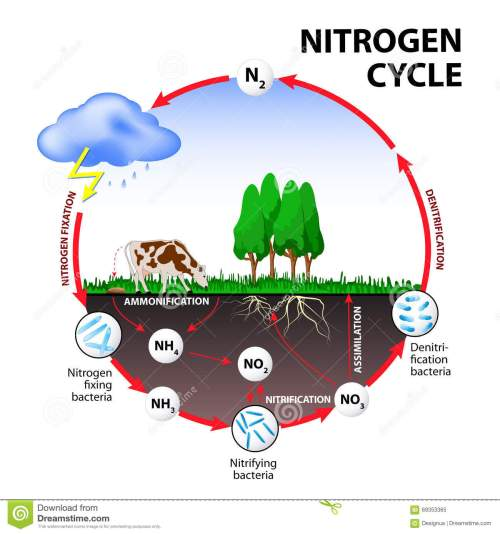 small resolution of nitrogen cycle the processes of the nitrogen cycle transform nitrogen from one form to another illustration of the flow of nitrogen through the