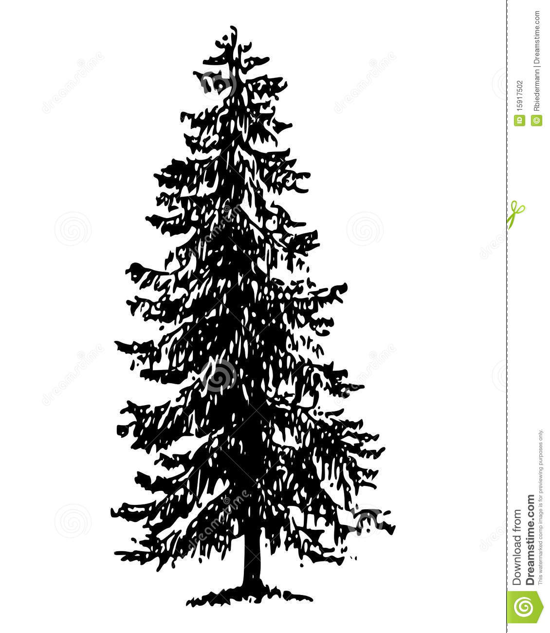 Norway Spruce Stock Vector Image Of Conifer Norway