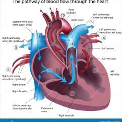 Vintage Red Real Heart Diagram Stewart Warner Oil Pressure Gauge Wiring O Caminho Do Sangue Corre Através Coração
