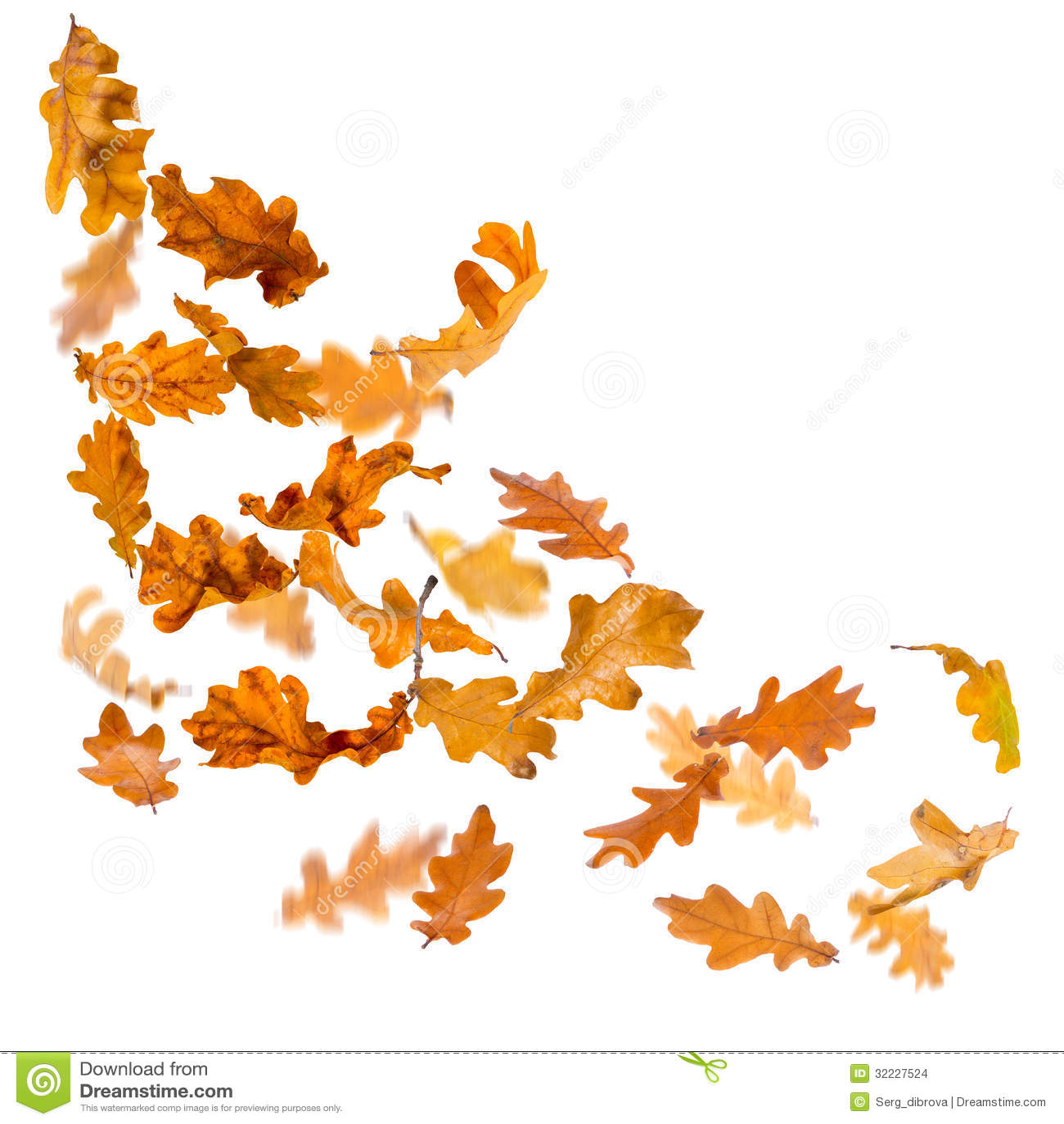Wallpaper Border Falling Off Oak Leaves Falling Stock Images Image 32227524