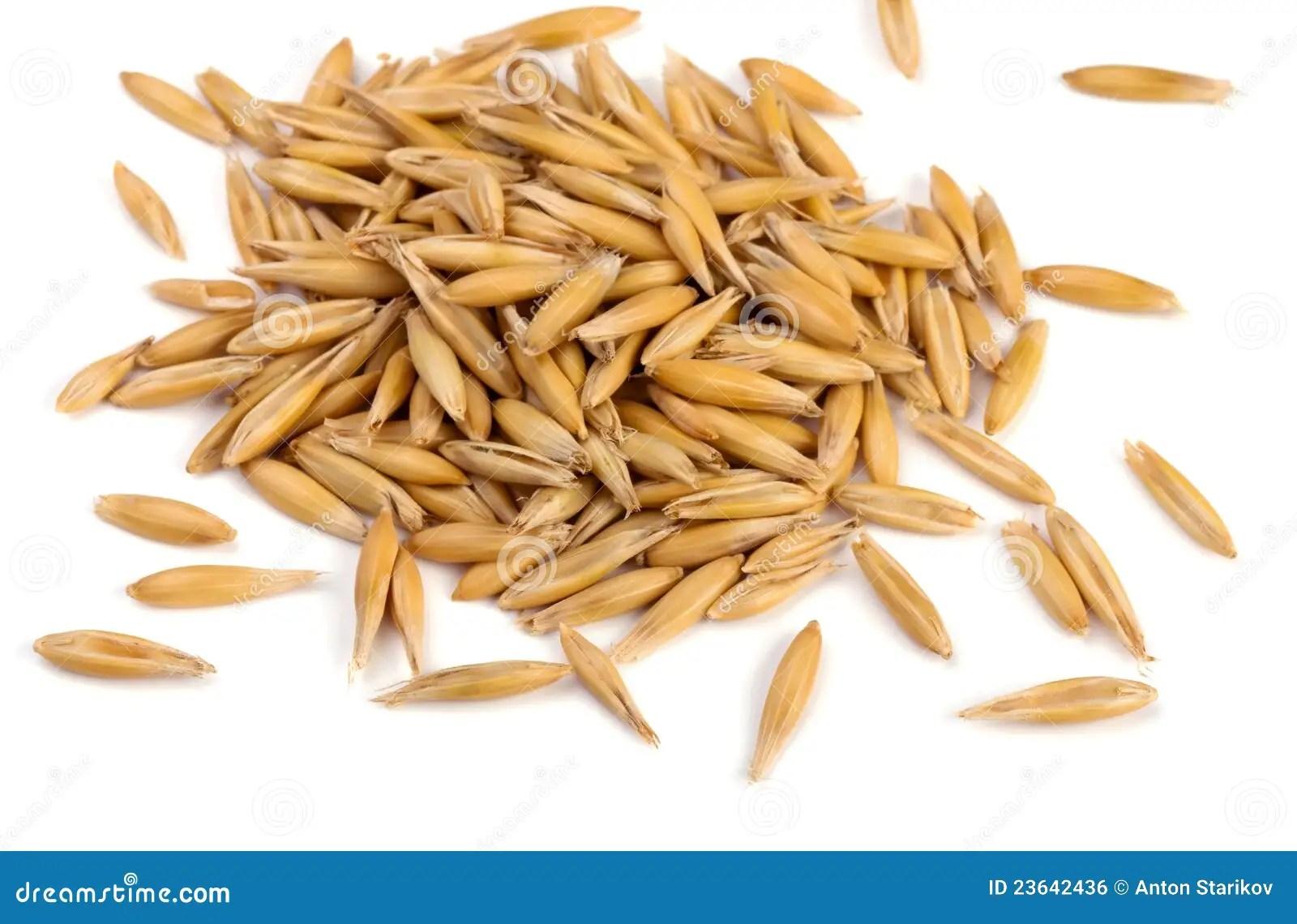 hight resolution of oat grains