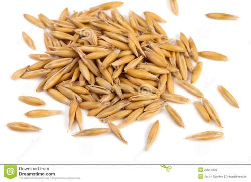 small resolution of oat grains