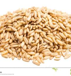 oat grains pile of grains isolated white background  [ 1300 x 821 Pixel ]