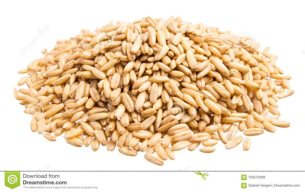 medium resolution of oat grains pile of grains isolated white background
