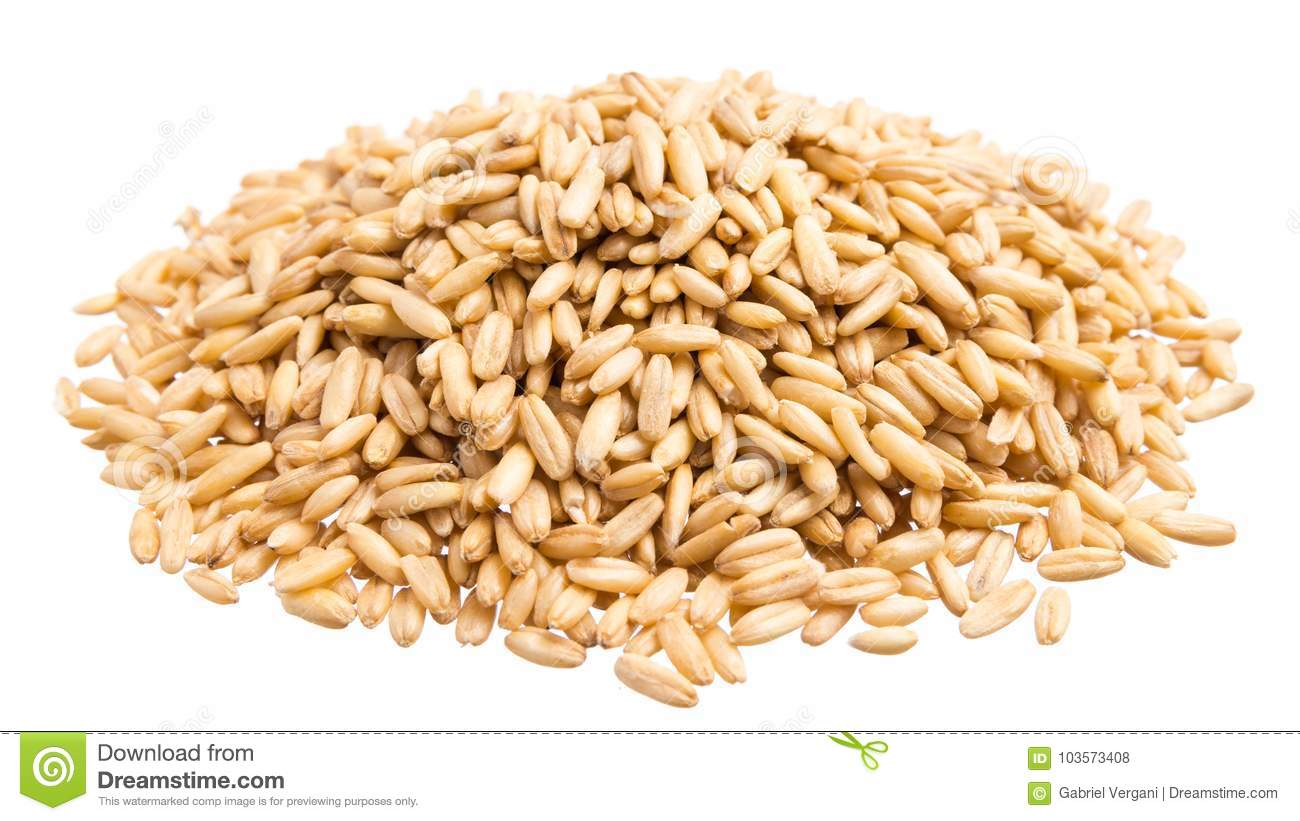 hight resolution of oat grains pile of grains isolated white background