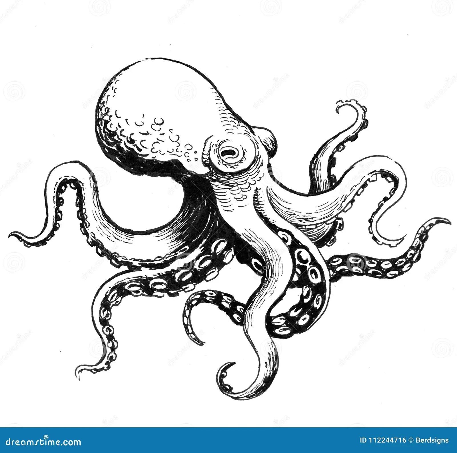 Octopus Sketch Stock Illustration Illustration Of