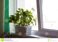 Office Flower Pots Office Flower Pots L - Unowinc.co