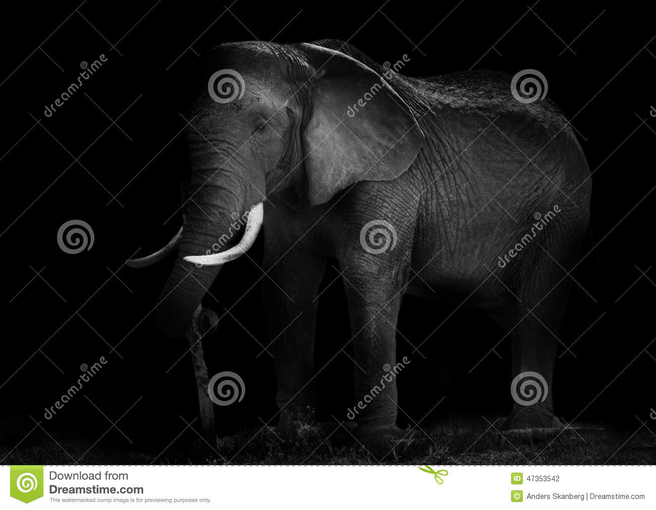 Old African Elephant Working Stock Photo