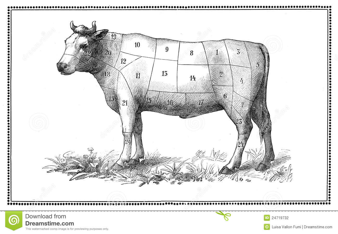 beef cuts diagram of cow 2001 ford f250 super duty trailer wiring old chart stock photography image 24719732