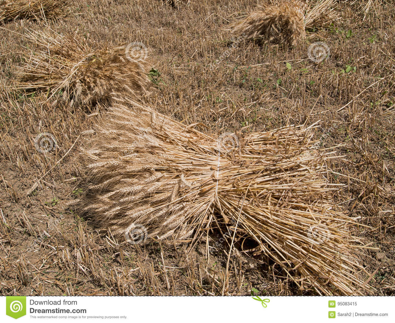 old fashioned wheat sheaves