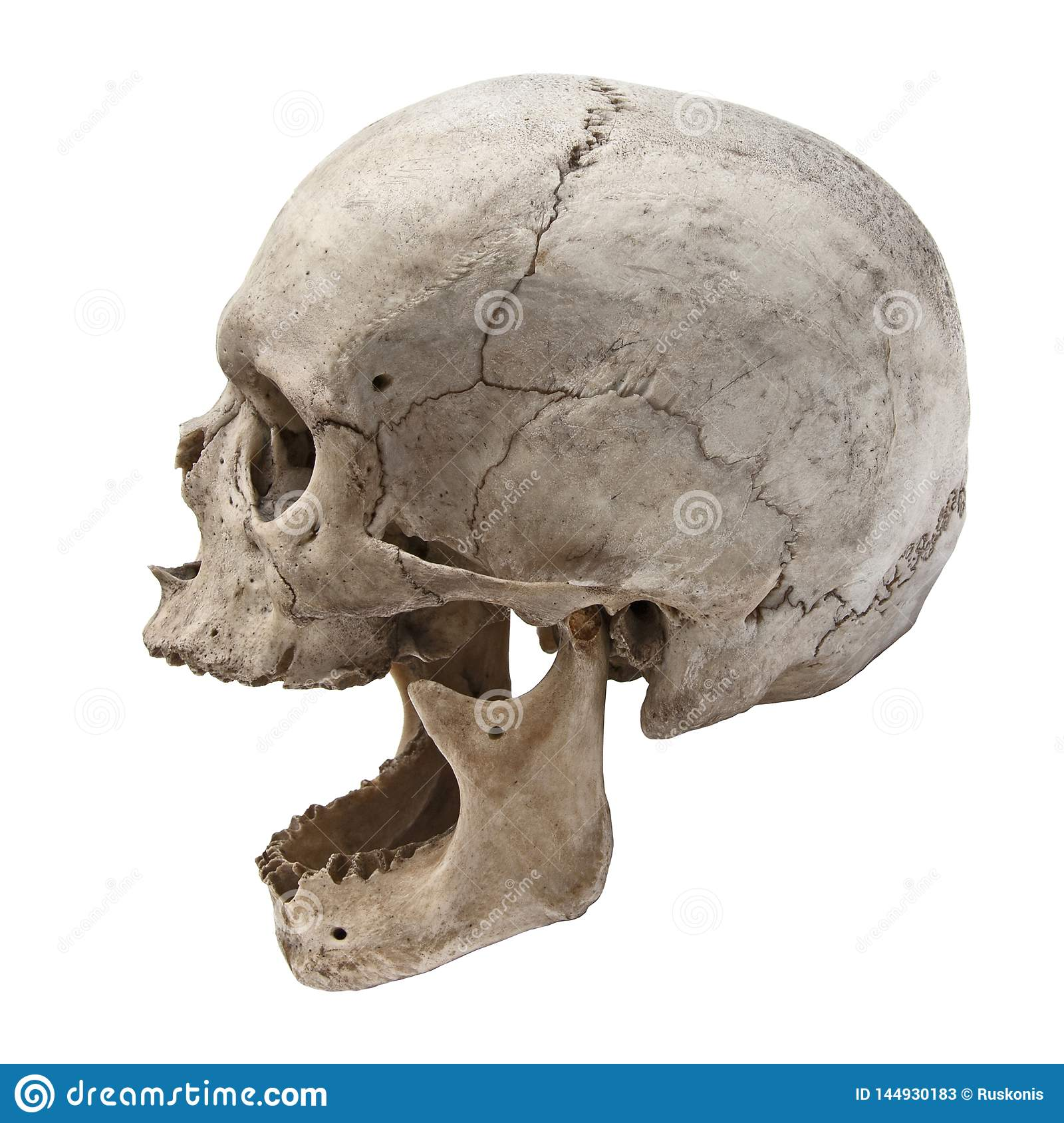 Old Human Skull View From Side Without Teeth Stock Image