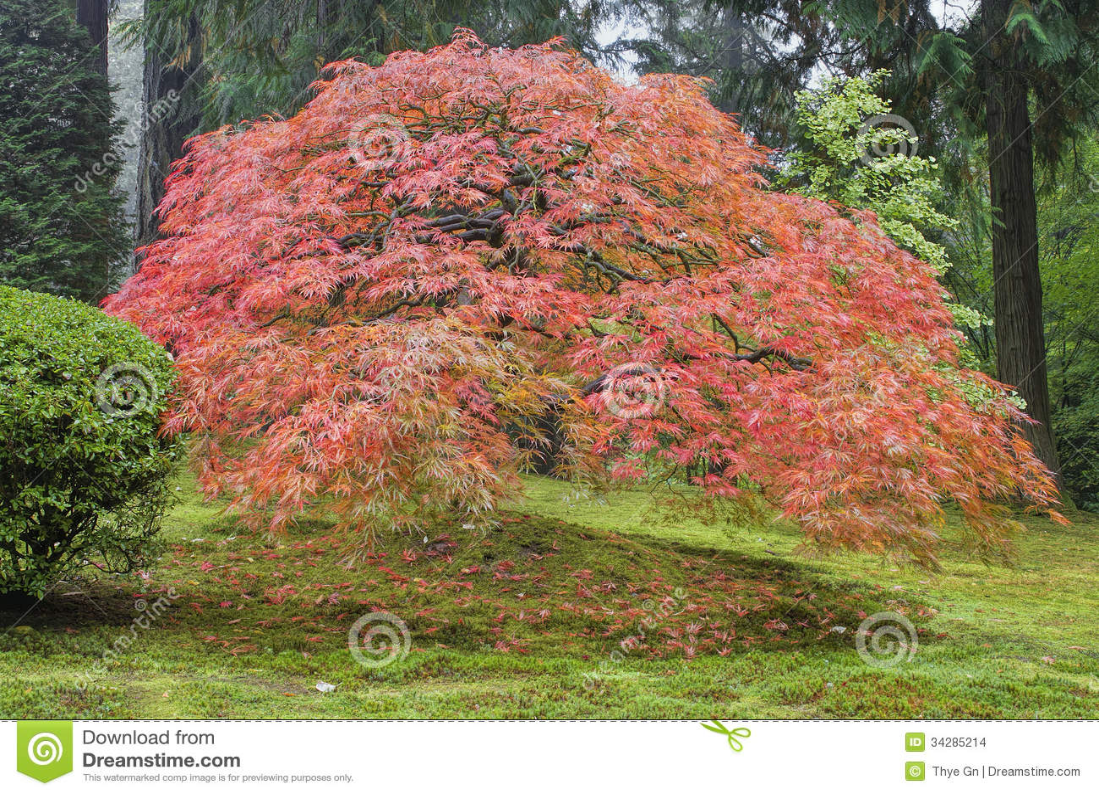 Autumn Leaf Landscaping