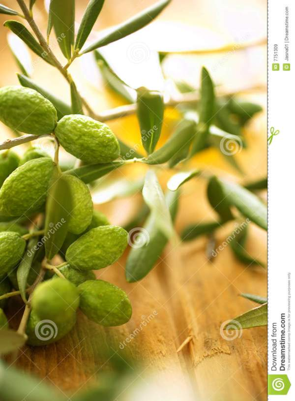 Set Of Olive Branches With Stems And Leaves Cartoon Vector