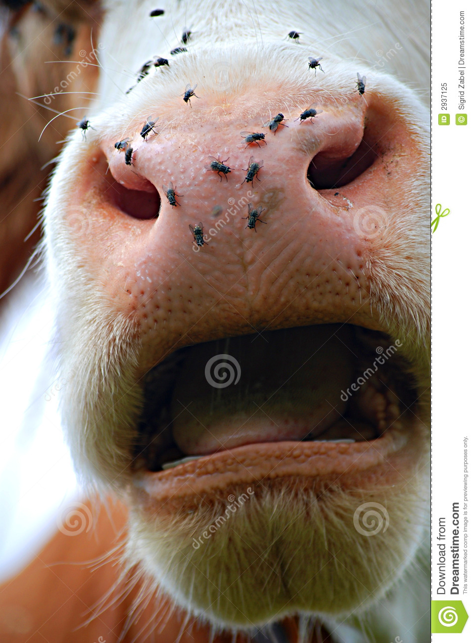 Open Mouth Royalty Free Stock Photo Image 2937125