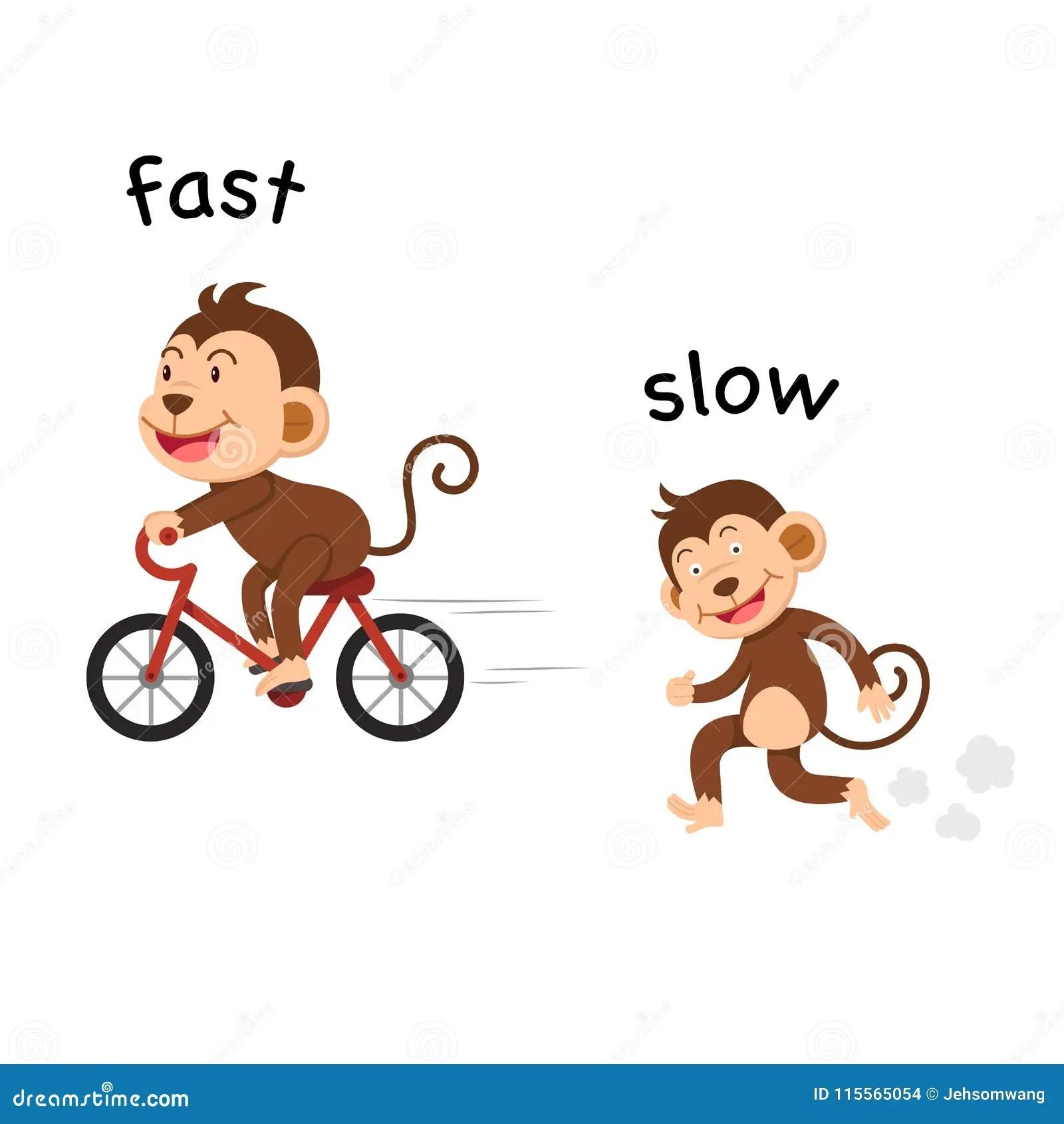 Opposite Fast Slow Stock Illustrations 39 Opposite Fast