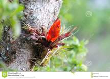 Orange Bromeliad Flower Tree In Cloud Forest Jungle