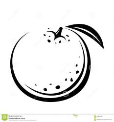 orange fruit vector drawing background contour isolated preview