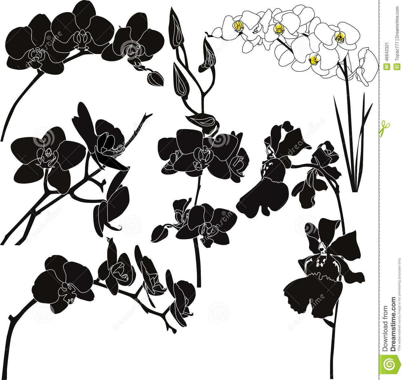 Orchids Stock Vector Illustration Of Isolated Drawing