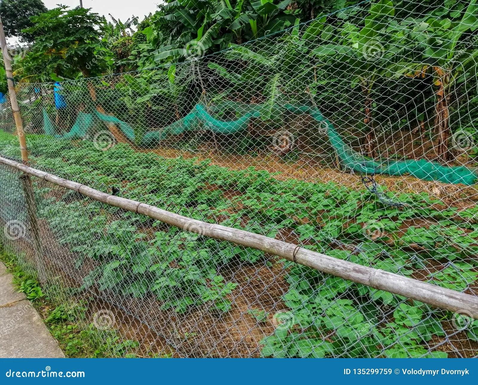 An Organic Farm On The Lantau Island. Hong Kong Stock Image - Image of cultivation. hong: 135299759