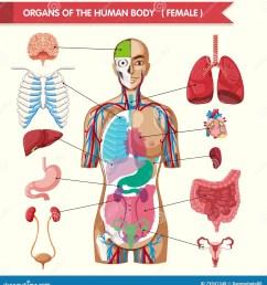 organs of the human body diagram [ 1322 x 1300 Pixel ]