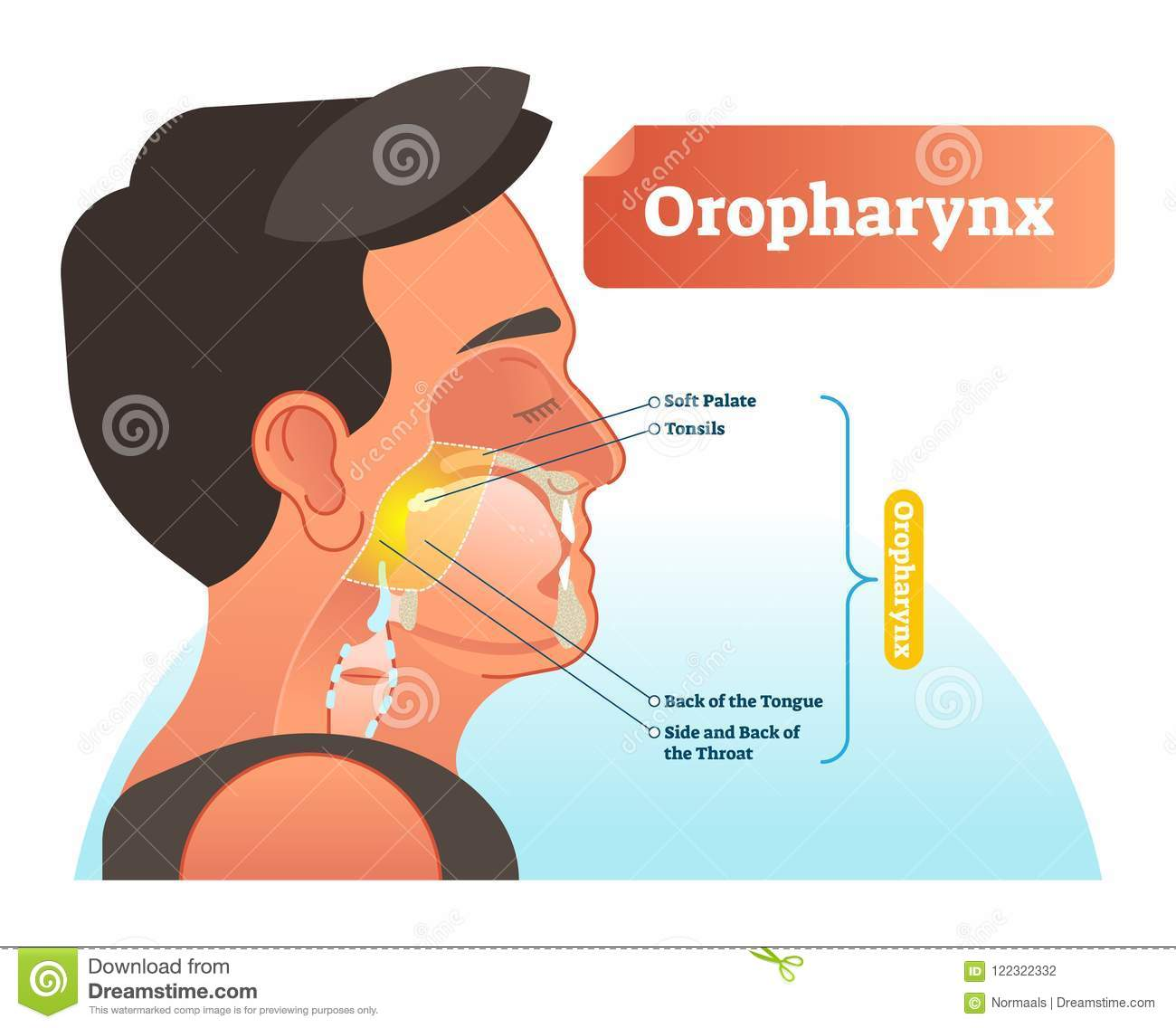 hight resolution of oropharynx vector illustration anatomical labeled scheme with human soft palete tonsils back of tongue and side of throat