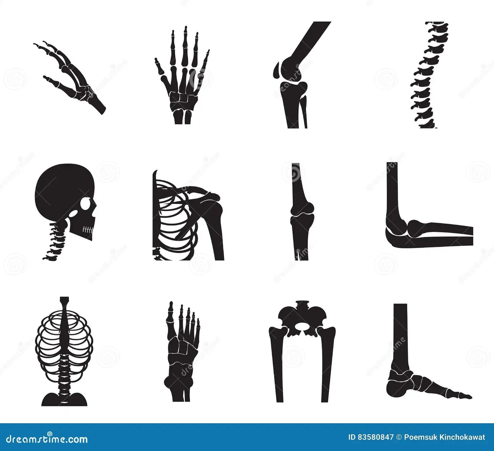 Orthopedic And Spine Icon Set On White Background Stock