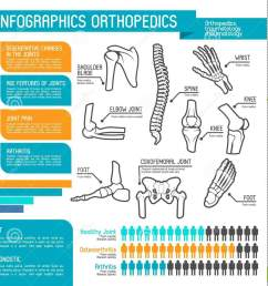 joint and bone disease statistic graph and chart human skeleton anatomy diagram with spine foot and hand knee shoulder elbow and pelvis body part [ 1388 x 1300 Pixel ]