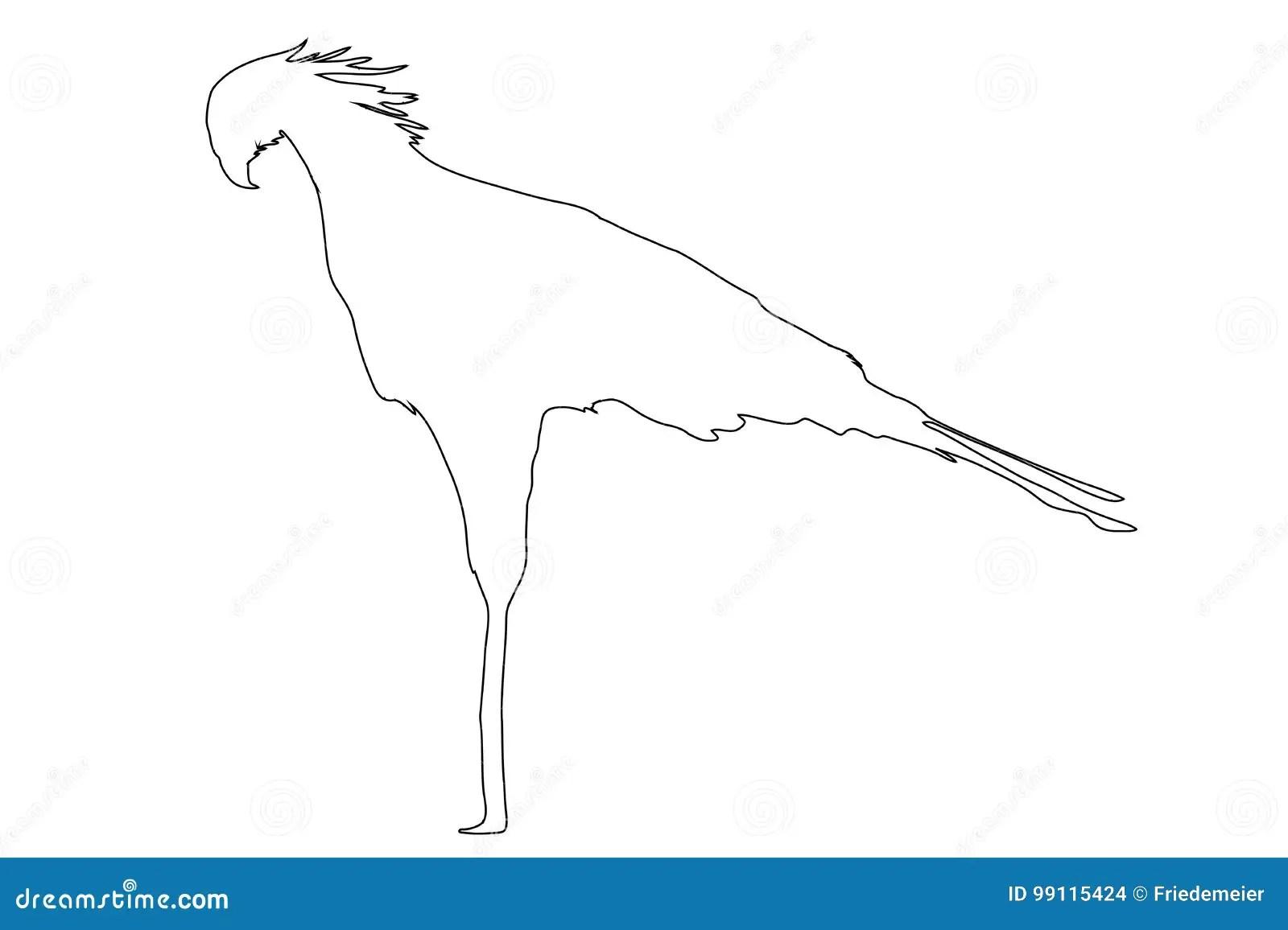 Outline Of An African Secretary Bird Stock Vector